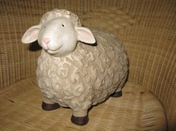 A Sheep With No Name