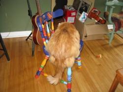 Happy Cat on Happy Cat Chair
