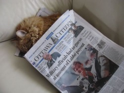 Duncan snoozes under the news