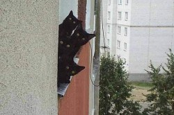 catsblack