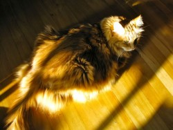 A sunbeam for Duncan