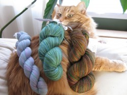 Wake up Duncan, there's new yarn!