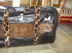 Duncan in his leopard skin carrier
