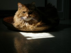 Duncan in a sunbeam